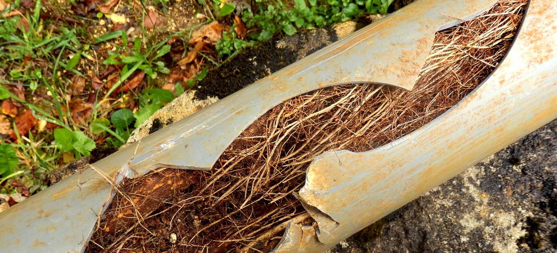 Ta bort rötter från rör